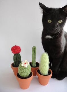 Crocheted cacti.  No prickles, and they grow about as fast as the real deal.