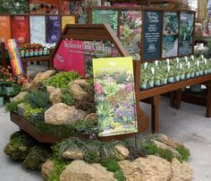 what a great retail display – rockery plants - Modern Best Greenhouse, Greenhouse Plans, Garden Center Displays, Rockery Garden, Garden Nursery, Plant Nursery, Little Gardens, Garden Shop, Grow Lights
