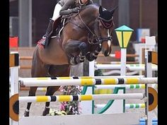 www.sporthorses-online.com 2005 top jumping mare S*** level 17 hh for sale