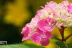 Colors of love by lolongan. Please Like http://fb.me/go4photos and Follow @go4fotos Thank You. :-)