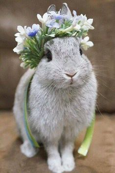 Sweet bunny rabbit Spring rabbit with floral crown. Cute Baby Bunnies, Funny Bunnies, Cute Baby Animals, Animals And Pets, Funny Animals, Beautiful Creatures, Animals Beautiful, Pretty Animals, Fluffy Bunny