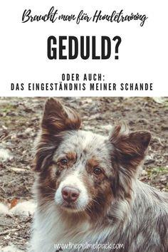 Braucht man für Hundetraining etwas Geduld? Dann bin ich leider die Falsche. :-) | thepellmellpack.com