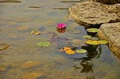 The lotus flower is nourished in muddy water. Throughout its life it may not see the light through the dark murky water but its beauty is revealed at daylight when it blooms. The challenges we face and the obstacles we overcome create our inner beauty for without them we would not grow.