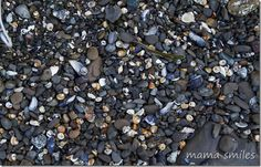 Exploring tide pools with kids. The beauty of no-carry-out rules is that you find untouched shell collections like this. Biology For Kids, Marine Reserves, Shell Collection, Tide Pools, Marine Biology, Family Activities, Exploring, Collections, Beauty