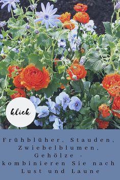 Orange und Hellblau eine tolle Allianz... Sie liegen im Farbkreis fast gegenüber und sind deshalb besonders harmonisch. Gepflanzt wurden Aschenblume-PericallisLavenderund Ranunkeln-Ranunculus Hybr. Marche`Orange Mehr Kombinationen und Farbbeispiele für Ihre Balkon- und Kübelpflanzen gibt es auf meinem Blog! #Balkonpflanzen #Kübelpflanzen #Frühling #Petra Pelz Island, Plants, Blog, Patio, Annual Flowers, Orange Flowers, Summer Flowers, Landscape Diagram, Planting