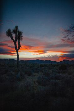 Anna Jones | Art of Photography » Weddings, Families, Editorial, Worldwide #Travel.  #joshuatree #landscapes #photography