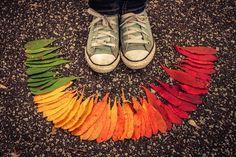 Autumn Leaves Arranged Like Rainbows