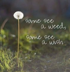 . Dandelion Quotes, Dandelion Wish, Wish Quotes, Poem Quotes, Poems, Positive Attitude, Positive Quotes, Student Teacher Gifts, Perspective Quotes