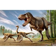 Tyrannosaurus Rex attacking two Struthiomimus dinosaurs Canvas Art - Mohamad HaghaniStocktrek Images (36 x 23)