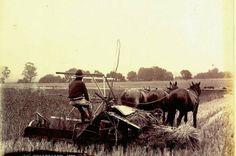Reaper Binder 1899