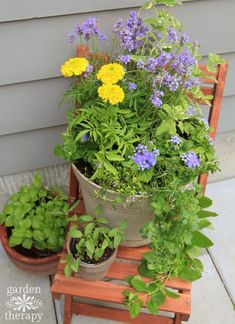 A Mosquito-Repelling Container Garden Arrangement for the Deck or Patio