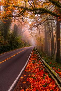 30 Mind-Blowing Images Taken With Entry-Level Gear Does Gear Really Matter? 30 Mind Blowing Images Taken With Entry Level GearDoes Gear Really Matter? 30 Mind Blowing Images Taken With Entry Level Gear Beautiful World, Beautiful Places, Beautiful Pictures, Mind Blowing Images, Nature Landscape, Foggy Forest, Forest Road, Autumn Morning, Early Morning