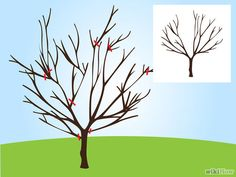 How to Prune a Cherry Tree: 11 Steps (with Pictures) - wikiHow art design landspacing to plant Fruit Plants, Fruit Garden, Garden Trees, Edible Garden, Lawn And Garden, Herbs Garden, Prune Fruit, Pruning Fruit Trees, Tree Pruning