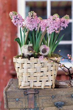 Hyacinths look lovely in a basket adorned with little wooly sheep.