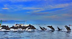 Book Bali Dolphin Cruise tour Package from India, Bangladesh, Nepal, Bhutan and Tibet with Galaxy Tourism in Best Price. Enjoy the Best Cruise tour DMC in Bali. Bali Lombok, Best Places In Bali, Places To See, Java, Lovina Bali, Bali Tour Packages, Dolphin Tours, Bali Baby, Voyage Bali