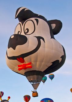 [2013 Balloon] Welcome Spunky!  Flown by John Calvin, of Menlo, Georgia, this dapper skunk will grace the skies of Albuquerque in October.  www.balloonfiesta.com