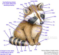 Baby Raccoon Coloring Guide by Crafts - Cards and Paper Crafts at Splitcoaststampers