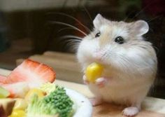 ANYTHING TO GIVE FOR EVERYONE: Funny - Animals with their food