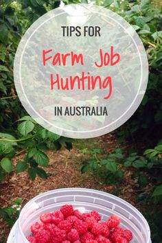 How to Find Farm Work in Australia Jobs Australia, Work In Australia, Moving To Australia, Visit Australia, Australia Travel, Working Holiday Visa, Working Holidays, Work And Travel Australien, Work Visa