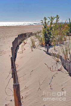 Building a dune