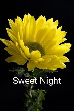 Good Night Sayings with Yellow Images Good Night Love Messages, Good Night Thoughts, Photos Of Good Night, Good Night Love Quotes, Good Night Love Images, Good Night Prayer, Good Night Greetings, Good Night Blessings, Good Night Wishes