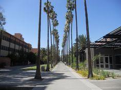 Palm Walk.