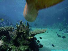 mermaids-and-anchors:Mako Mermaids, Season 2