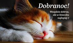 Kartka z kotkiem Dobranoc. #polska #kotek #kot #kartka #dobranoc #słodziak #kociak #aww Animals And Pets, Baby Animals, Weekend Humor, African Flowers, Everything Funny, Jennifer Love Hewitt, Cat Quotes, Funny Faces, Good Night