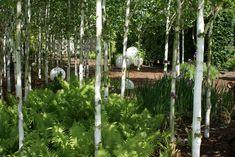 himalaya-birken › zinsser gartengestaltung, schwimmteiche und, Garten ideen