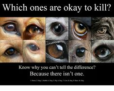Which ones are ok to kill??