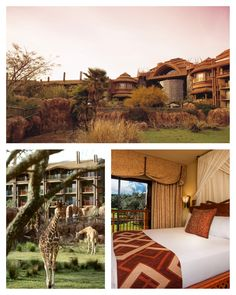 At Disney's Animal Kingdom Lodge, you can enjoy a stunning sunrise or sunset on the savanna from the comfort of your own private balcony, where you may be treated to up-close encounters with exotic wildlife.