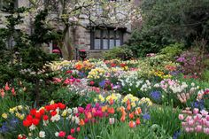 Gegen Unkraut im Garten hilft Jäten oder die Chemie. Eine einfachere, schönere und pflegeleichtere Möglichkeit, sind immergrüne Bodendecker.