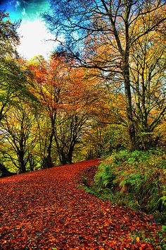 location -: the fall of Autumn leaves on the way to Bracklin falls Callender scotland, Autumns Red Carpet! by Kevin Smith 06, via Flickr