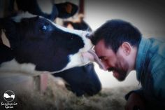 10 Things You Never Knew Cows Could Do