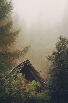 Misty Cabin in the woods Into The Woods, Cabins In The Woods, Plein Air, The Great Outdoors, Wilderness, Mists, Woodland, Nature Photography, Beautiful Places