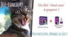 #Quiz : etes vous prêts pour l'arrivée de votre chat ? #JeuConcours : un kit Feliway à Gagner !