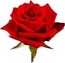Resultado de imagem para gifes de rosas em movimentos e esfeitos