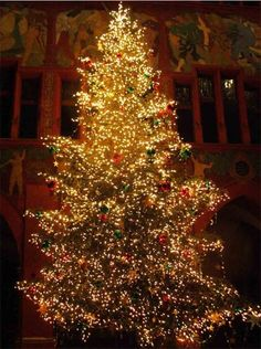 218 best Christmas Trees and Lights images on Pinterest | Christmas ...