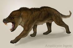 "Amphicyon ingens  Prehistoric ""bear dog"" based on a mount at the AMNH.  by viergacht.deviantart.com on @deviantART"