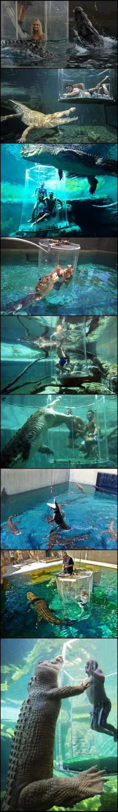 Swimming with alligators. I think they are so cute for some reason. Look at their webbed feet! Love love love <3