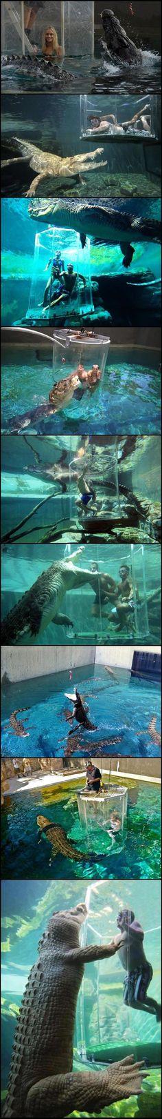 Swimming with alligators.
