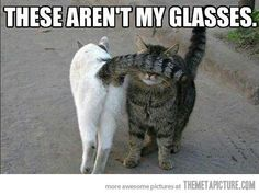 Funny pictures about I can't see! Oh, and cool pics about I can't see! Also, I can't see! Funny Shit, Funny Cat Memes, Funny Cute, Hilarious, Crazy Cat Lady, Crazy Cats, I Love Cats, Cute Cats, Funny Animals