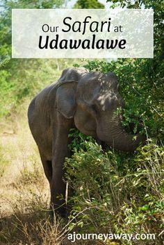 Going on a safari at Udawalawe national park, Sri Lanka