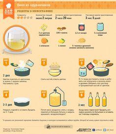 Вино из одуванчиков | Рецепты в инфографике | Кухня | Аргументы и Факты