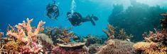 Souvenir Fridge Magnet Of The Great Barrier Reef Australia Australia Tourism, Mission Beach, Adventure Bucket List, Great Barrier Reef, Scuba Diving, Travel Inspiration, Images, Tours, Utila