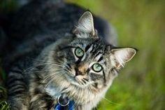 How Make a Backyard Cat Enclosure thumbnail