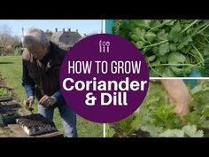 Discover and enjoy these quicker and easier ways of growing and harvesting vegetables, based on my 36 years of growing experience. My speciality is the no di...