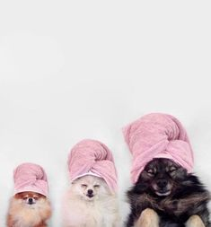 When the squad comes over for spa day. Jeffree Star, Beauty Companies, Happy Memorial Day, Wellness, Kylie, Beauty Box, Spa Day, Beauty Routines, Puppies