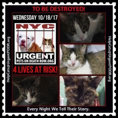 To Be Destroyed Cats Wed. 10/18/17