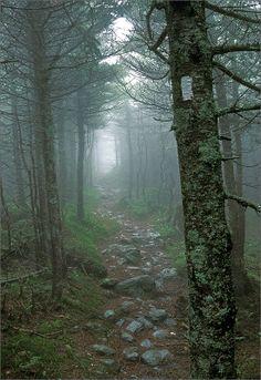 Long trail, Vermont, trail, fog, photo